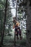 Straszna zabawka wieszająca od drzewa obraz royalty free