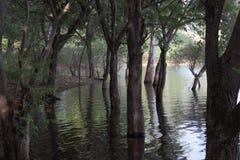 Straszne sceny woda i drzewa w lesie Zdjęcie Stock