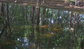 Straszne sceny woda i drzewa w lesie Obrazy Royalty Free