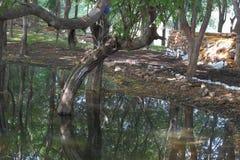 Straszne sceny woda i drzewa w lesie Zdjęcia Stock