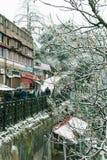 straszni drzewa zdjęcie royalty free