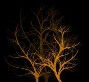 straszni drzewa ilustracja wektor