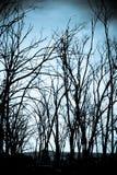 straszni drzewa Fotografia Stock