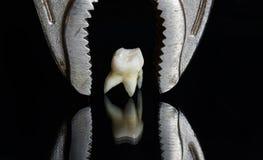 Straszni metali tongs nad złym przegniłym zębem ciągnęli i stojaki na a Fotografia Royalty Free