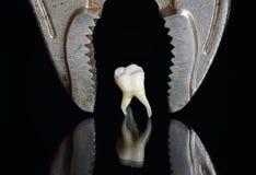 Straszni metali tongs nad złym przegniłym zębem ciągnęli i stojaki na a Obrazy Royalty Free