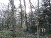 Straszny światło dzienne las Zdjęcia Royalty Free
