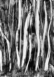 Straszny drzew wosku obraz Fotografia Royalty Free