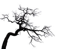 straszny drzewo zdjęcie royalty free