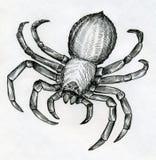 Straszny duży pająk Zdjęcia Royalty Free