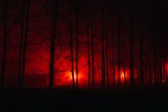 Straszny mgłowy las Zdjęcie Royalty Free