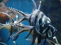 straszny ryb Obrazy Stock