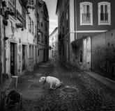 Straten van de oude stad van Coimbra portugal royalty-vrije stock foto's