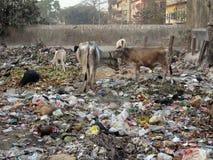 Straten van Kolkata Royalty-vrije Stock Foto