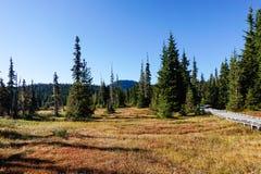 Strathcona Provincial Park: Forbidden Plateau ~ Paradise Meadows Stock Images