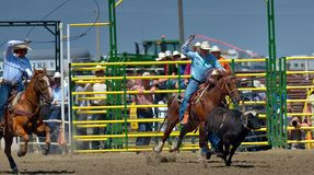 Strathmore Stampede , Alberta , Canada. Break out the boots, belt buckles and cowboy hats and check out the Strathmore Stampede. Or, we double dare you to run Stock Photo