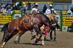 Strathmore Stampede , Alberta , Canada. Break out the boots, belt buckles and cowboy hats and check out the Strathmore Stampede. Or, we double dare you to run Royalty Free Stock Photo