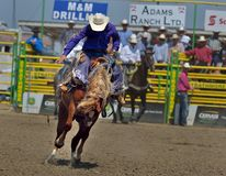 Strathmore Stampede , Alberta , Canada Royalty Free Stock Photos