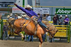 Strathmore Stampede , Alberta , Canada. Break out the boots, belt buckles and cowboy hats and check out the Strathmore Stampede. Or, we double dare you to run Royalty Free Stock Image