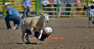 Strathmore Stampede , Alberta , Canada. Break out the boots, belt buckles and cowboy hats and check out the Strathmore Stampede. Or, we double dare you to run Stock Photography