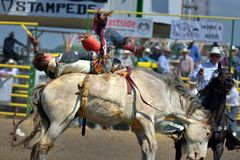 Strathmore Stampede , Alberta , Canada. A cowboy, member staff of exhibition riding his horse Stock Photos