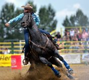 Strathmore  stampede Stock Images