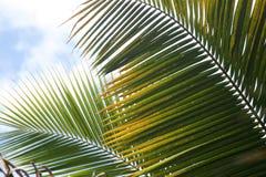 Strati della palma, astratti Fotografia Stock Libera da Diritti
