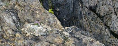 Strati delle rocce metamorfiche Immagini Stock Libere da Diritti