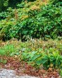 Strati variopinti delle viti e delle foglie dell'albero lungo la strada campestre Immagini Stock Libere da Diritti