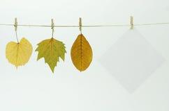 Strato del documento in bianco e fogli di autunno Fotografia Stock