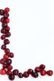 Strato di carta con le ciliege Immagine Stock