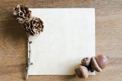 Strato di carta vuoto con le ghiande ed i coni Immagini Stock