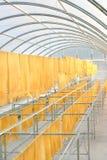Strato di gomma nell'alloggiamento di secchezza solare Fotografie Stock Libere da Diritti