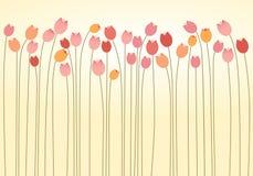 Strato orizzontale dei tulipani Immagine Stock