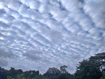 Stratocumulus clouds. In the blue sky above a nature park in Singapore Royalty Free Stock Photography