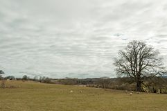 Stratocumulus clouds in a meadow in springtime. Royalty Free Stock Photo