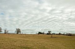 Stratocumulus clouds in a meadow in springtime. Stock Image