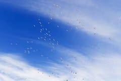 Stratospheric  wild ducks Royalty Free Stock Image