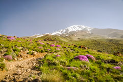 Stratovolcano Mount Damavand Stock Images