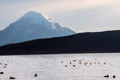 Stratovolcano Sajama under the Lake Chungara. Snow capped Stratovolcano Sajama under the Lake Chungara, Chile-Bolivia Royalty Free Stock Image