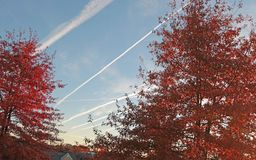 Stratus Clouds fill the Blue skyline in Northern NJ. Stratus Clouds fill the Blue skyline in Northern New Jersey. Trees are showing off their Fall Autumn Colors royalty free stock image