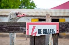Strauß hinter dem Zaun Plakat mit der Aufschrift klettern nicht Trauriger Blick eines Vogels in der Gefangenschaft stockbild