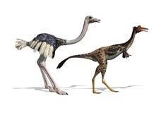 Strauß-und Mononykus Dinosaurier-Vergleich Stockfoto