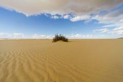 Strauch in der Wüste Stockbild