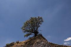 Strauch im Berg Stockbilder