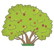 Strauch mit Beeren lizenzfreie abbildung