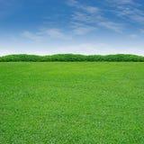 Strauch und Gras Lizenzfreie Stockfotos