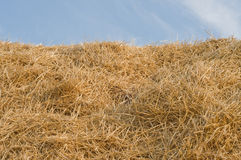 Straw. Dried yellow straw as texture or backgrounds Royalty Free Stock Photo
