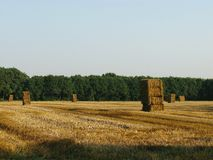 Straw. Bales at a field stock image