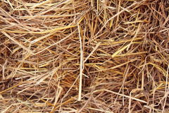 Straw Royalty Free Stock Photos