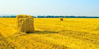 Straw. Royalty Free Stock Images